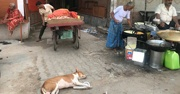 People cooking in the streets in India while a dog lays on the ground in front of them