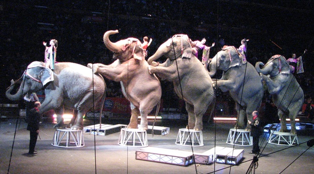 Ringling Brothers Elephants